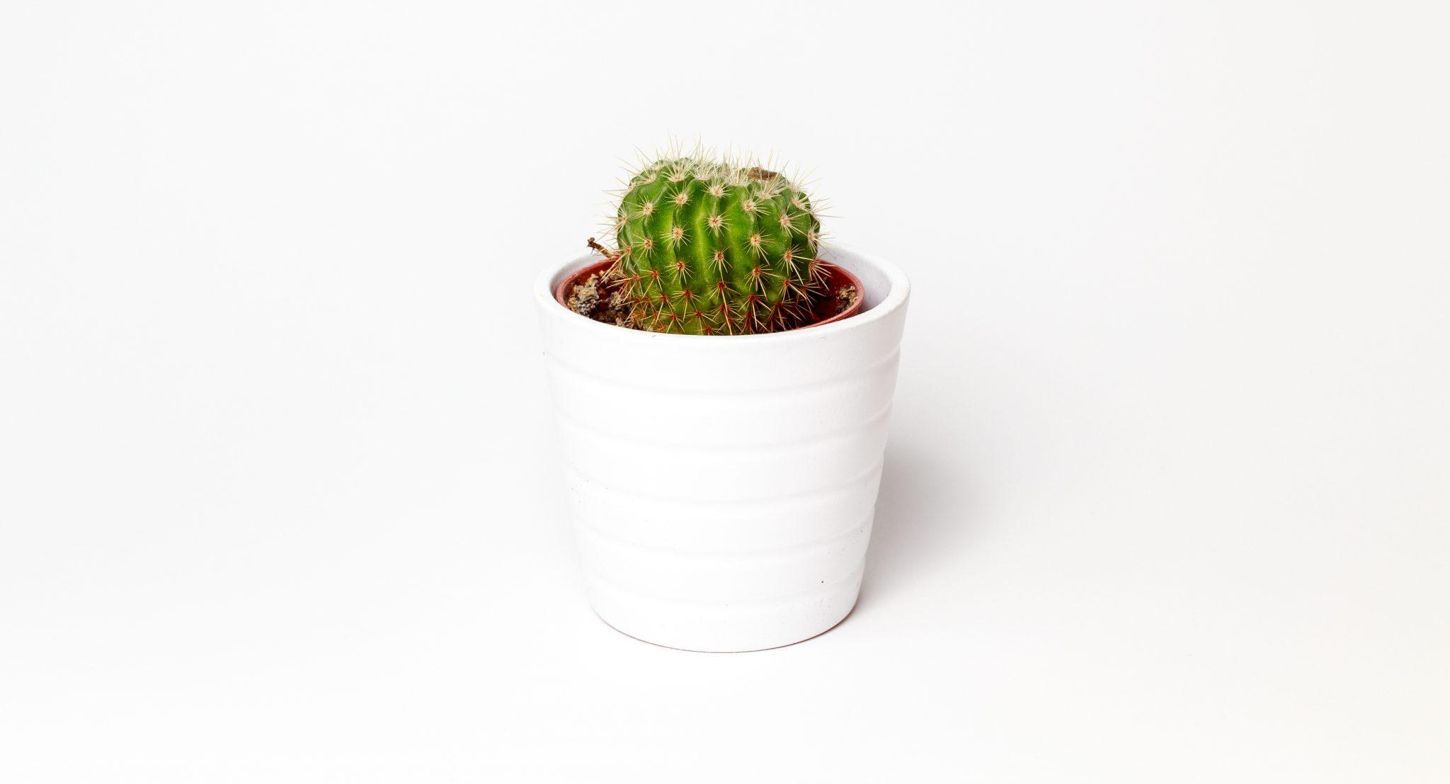 Columna: Mueve tu planta de tiesto